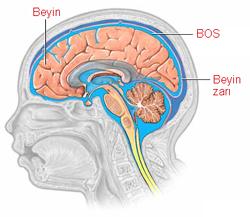 Beyin omurilik sıvısı